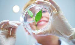 Chương trình du học ngành công nghệ sinh học tại Anh